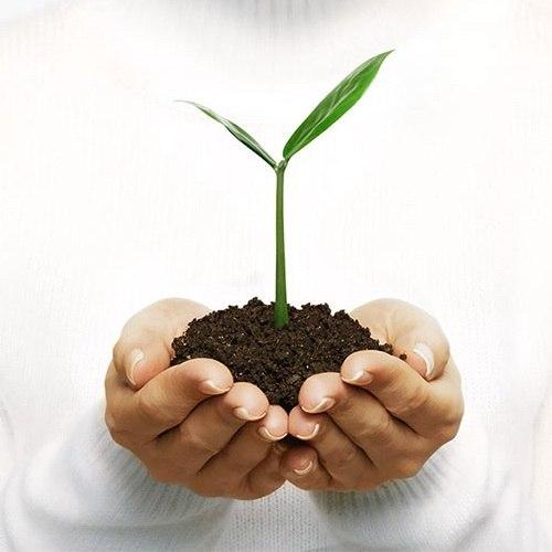 экологический проект: использование листьев как удобрение